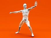 Anatomy _ Martial Arts