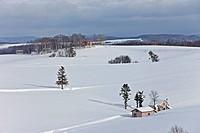 Trees in a Snowy Field in Biei, Kamikawa, Hokkaido, Japan