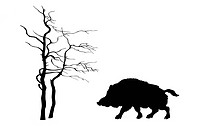 silhouette wild boar on white background