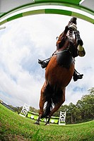 Horse Jumping Hurdle, Directly Below