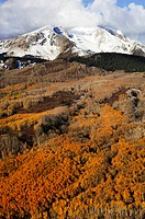 An aerial view of Mt. Sopris with orange aspens in the foreground.
