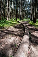 Installation by Andy Goldsworthy, 'Wood Line' in Park Presidio, San Francisco, USA