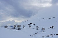 Parabolic Antennas on snow field.