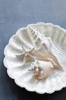Seashells and starfish in bowl