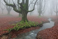 Forest of Otzarreta, Gorbea natural park, Araba, Spain