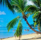 Beach with palm tree, fishermen, boat, Mah&#233; island, Seychelles