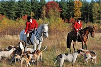 Hunters on horseback with pack of hounds during drag hunting in autumn, an alternative to fox hunting, Europe