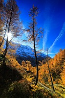 Fafleralp, autumn, colors, larch, larches, larch wood, L&#246;tschental, sunshine, valley, Unesco, world heritage, Valais, Switzerland, Europe, world herit...