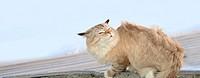 Frozen cat in the wind, winter
