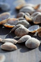 Empty clam shells