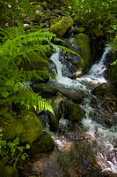 A brook cascades over the rocks in a fern filled valley