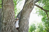 Girl 5_6 standing on tree in forest