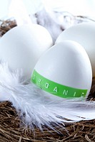 Organic Egg On White Feather