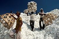 Cotton Shri Dnyaneshwar Ginning Pressing factory Pvt Ltd Kadka Maharashtra India