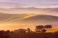 Val d´Orcia at dawn with morning fog, San Quirico d´Orcia, Tuscany landscape, UNESCO World Heritage Site, Siena Province, Tuscany, Italy, Europe