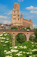 Cathedral of Saint Cecilia, Albi, Tarn, Midi-Pyrenees, France, Europe