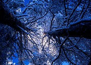 Snowy branch and blue sky