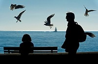 Europe, France, Alpes-Maritimes, Cannes. Seagulls by the sea.