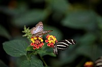 New York City, Bronx Zoo, Butterfly Garden