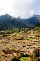 Paddy fields in the Paro Valley, Bhutan