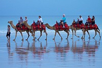 Tourist camel train on Cable Beach, Broome, Kimberley Region, Western Australia, Australia