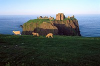 Dunnottar Castle ruins in the evening, Stonehaven, Grampian, Aberdeenshire, Scotland, Great Britain