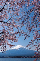 Mt. Fuji and cherry blossoms, Yamanashi Prefecture, Honshu, Japan