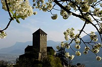 Blossoms in front of Tyrol castle in spring, South Tyrol, Alto Adige, Italy, Europe