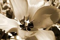 abstrat flower