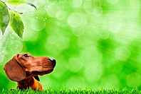 Abstract spring backgrounds with dog and foliage