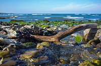 A Piece Of Driftwood Laying On The Rocks With Flowing Water On The Coast, Northumberland England
