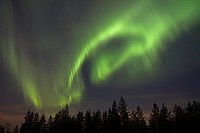 Aurora Borealis, over coniferous forest at night, Finland, february