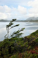 cox bay near tofino, british columbia canada