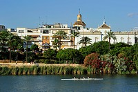 Spain, Andalucia, Seville, Guadalquivir River banks, in the foreground Plaza de toros and La Maestranza Bullrings, in the background the Cathedral wit...