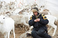 Norway, Lapland, Finnmark County, Karasjok, the great annual reinder migrationreinder sorting by family