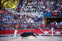 France, Gard, Beaucaire, One of the greatest competition of Course camarguaise called the Palme d´Or, in the roman bullring
