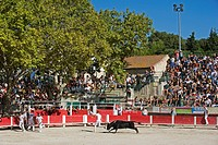 France, Bouches du Rhone, Fontvieille, Course camarguaise in the bullring