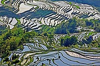 Rice terraces, Yuanyang,Yunnan, China