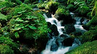 little flowing river in beautiful green natrure