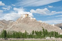 Tibetan Buddhist monastery on a hill, Thikse Monastery near Leh, a row of poplars, Ladakh region, Jammu and Kashmir, India, South Asia, Asia