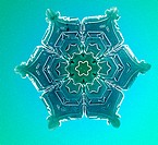 Color enhanced photograph of a snowflake negative. The snowflake was photographed on a glass plate by Wilson A. Bentley 1865 _ 1931, who was probably ...