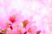 Pink cherry blossoms with abstract lights background