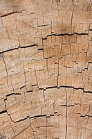 Tree rings closeup ideal for an organic background or texture