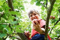 Smiling boy picking fruit in tree