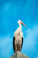 stork against cloudy sky