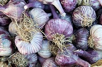Canada, BC, Saltspring Island  Ganges Saturday Farmers Market  Purple coloured garlic for sale