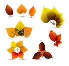 Autumn abstract leaf elements with nice details
