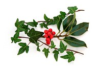 Ivy leaf and holly leaf sprigs with red berries, isolated over white background.