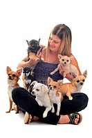 portrait of a woman and seven chihuahuas in front of white background