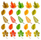 Set of leaves of various shapes and colors